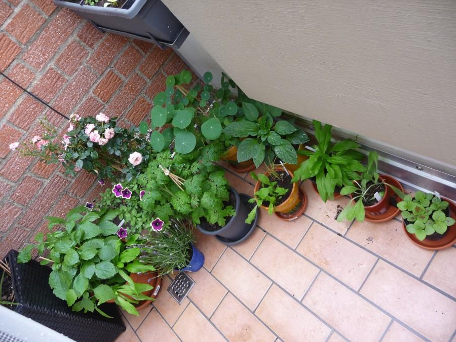 Meine Pflanzen