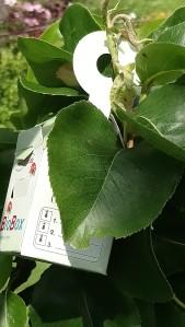 BioBox an der Birne