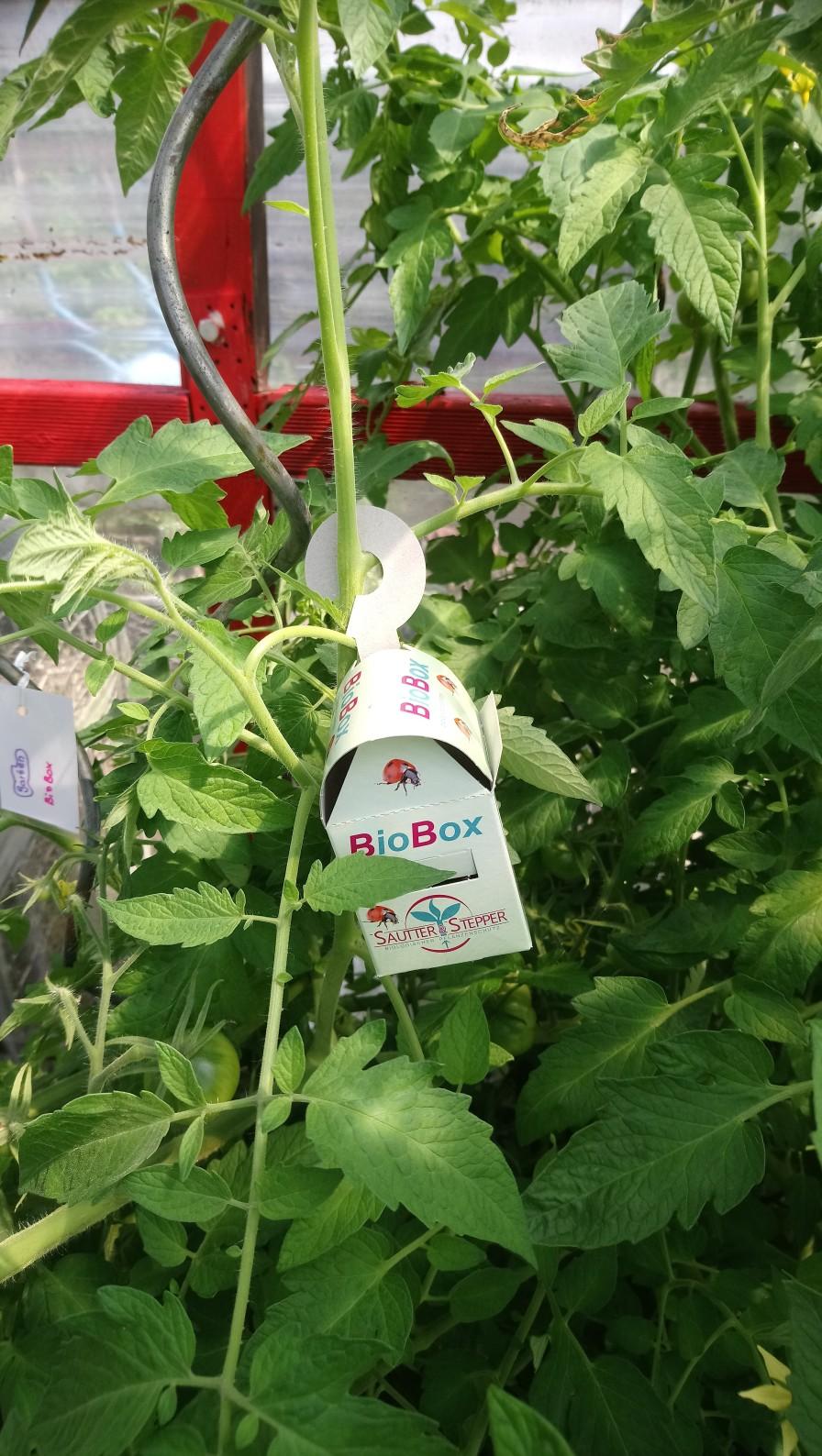 BioBox im Tomatengewächshaus