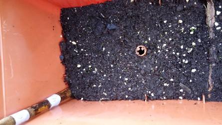 Beginn der Keimung Substrat 4