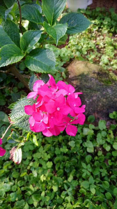pinke kleine Blüte